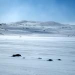 Skiløparar på Finse