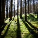 Skog i motsol